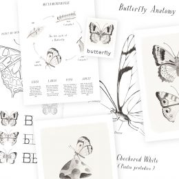 Butterfly_printableCollection